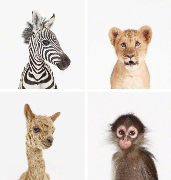 a zebra, a lion, a monkey & a llama  were in a boat...