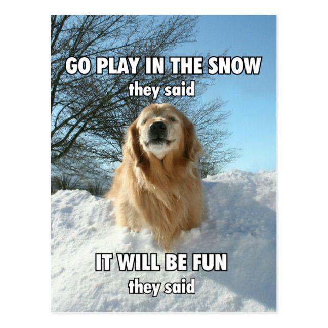Funny Golden Retriever Go Play In The Snow Meme Postcard Zazzle Com Golden Retriever Funny Golden Retriever Meme Snow Meme