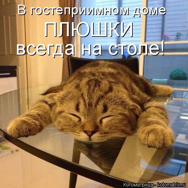 Котоматрица: В гостеприимном доме  ПЛЮШКИ всегда на столе!