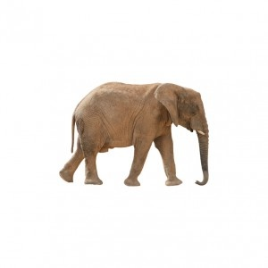 real-life elephant from The Wall Sticker Company