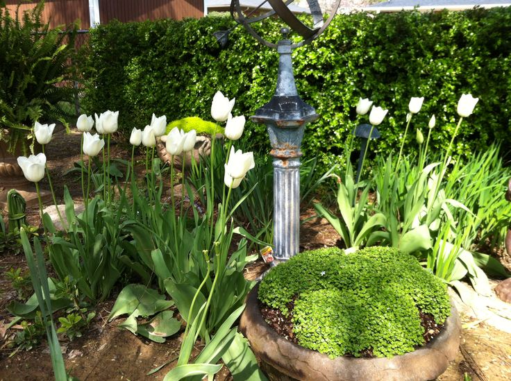 More tulips...and a sundial