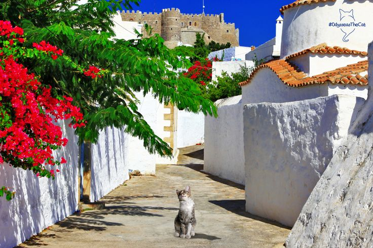 Today #OdysseasTheCat decided to discover all that #Patmos has to offer. First stop, the Agios Ioannis monastery! What should he do next? Can you suggest?