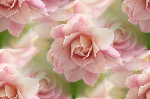 фон для дневника Нежно-розовый цветок
