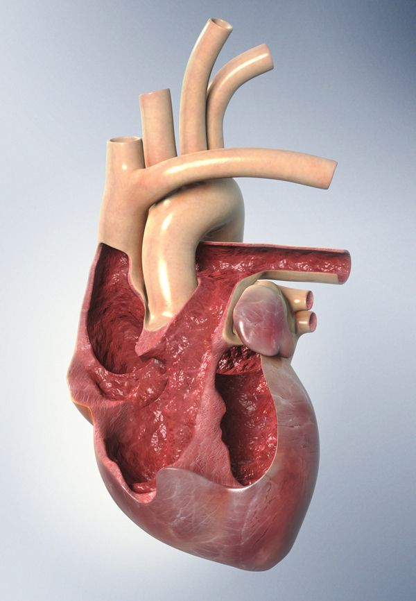 3D Heart Monitoring Diagram - Medical Imagery by Tim Cooper - 3D Image Creation, via Behance