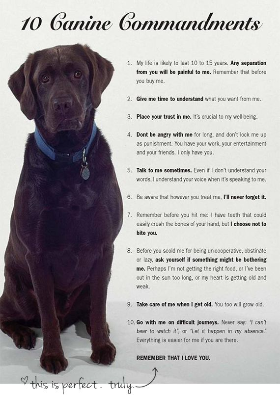 Every dog owner should read these! So sweet! ten canine commandments