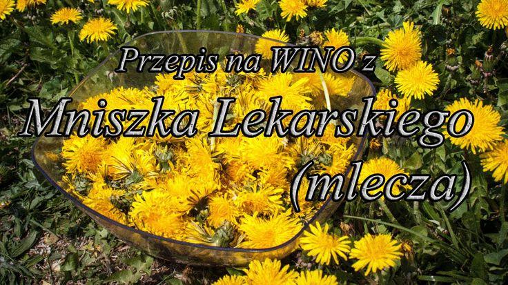 Wino z Mniszka Lekarskiego