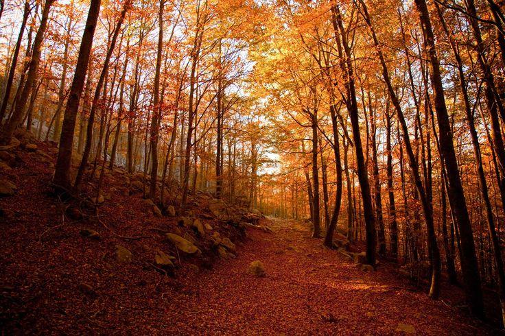 Parque Natural del Montseny, Cataluña  - Paisajes perfectos para el otoño en España