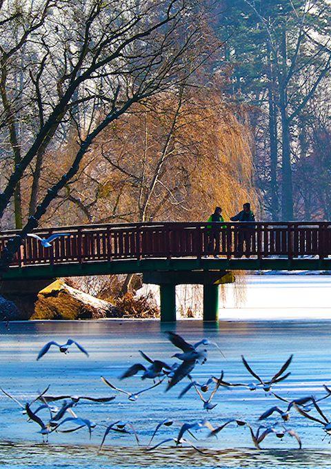 Poznan Poland, mostek w Parku Sołackim [fot.Małgorzata Kolasa].