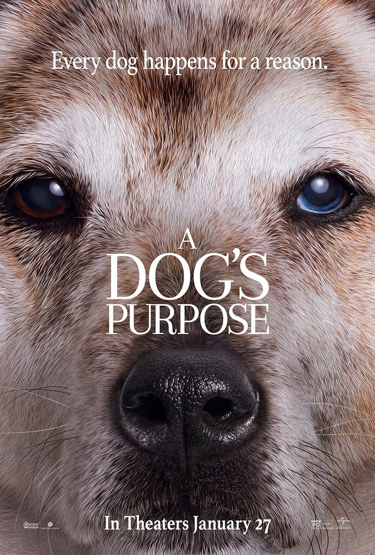 Watch A Dog S Purpose Online Free Movies