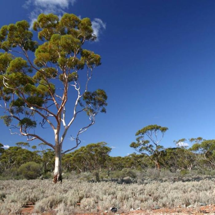 Conservation groups fear a WA shire could clear up to 500,000 hectares of biologically-rich bushland for farming.
