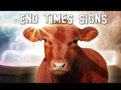 Flawless 'Red Heifer' Could Signal Building of the … | Prophetic 3rd