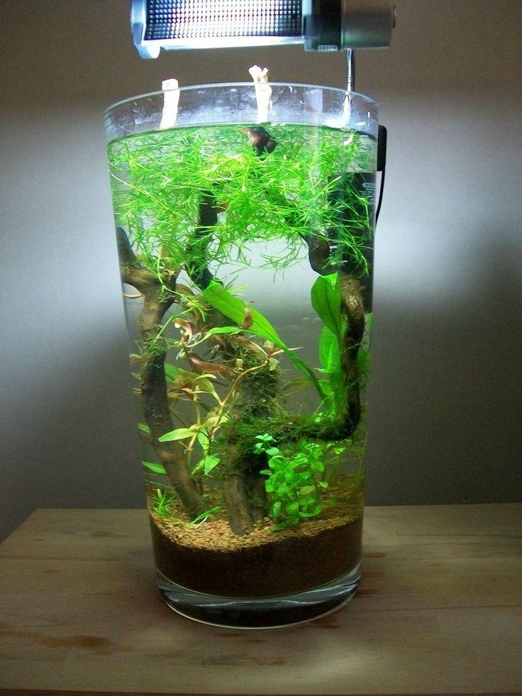 Miniature aquascape aquariums pinterest bocal for Deco bocal poisson