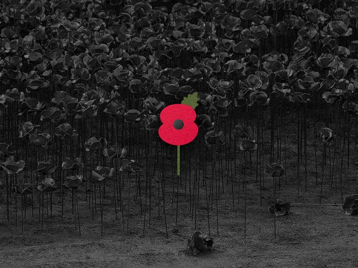 Remembrance Poppy / Blood Swept Lands and Seas of Red