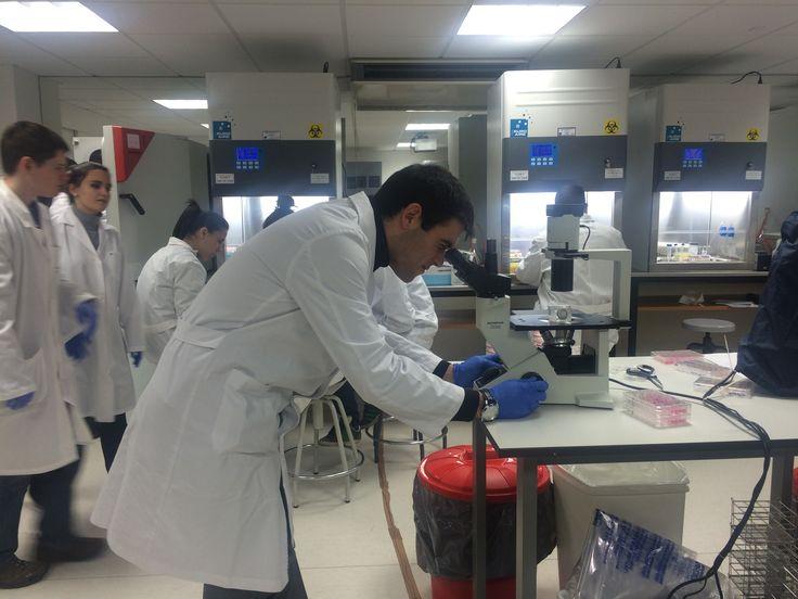 Nueva Sala de Cultivos Celulares en la UFV. De esta forma, los alumnos del Máster puede trabajar con células de organismos superiores en cabinas de flujo laminar que posibilitan el aislamiento de células madre o el manejo de células en un ambiente estéril gracias a un diseño que proporciona un aire limpio y constante. Cada alumno practica en una cabina con su propio juego de pipetas, en la que cultivan células, las descongelan, las transforman, en definitiva, llevan a cabo las actividades…