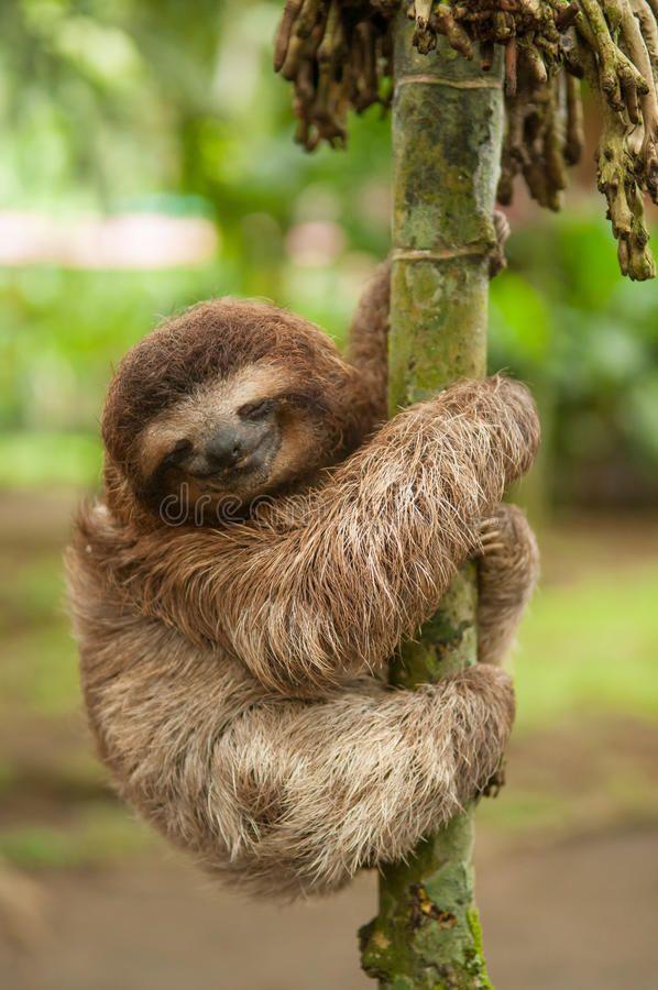 How A Sloth Gets A Bath Youtube