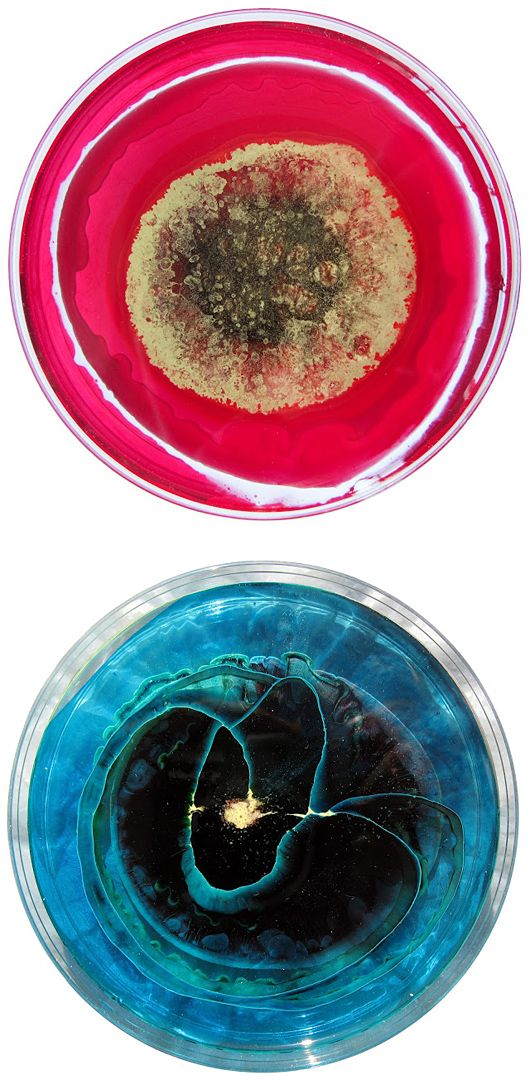 The Daily Dish: Petri Dish Art by Klari Reis | Inspiration Grid | Design Inspiration