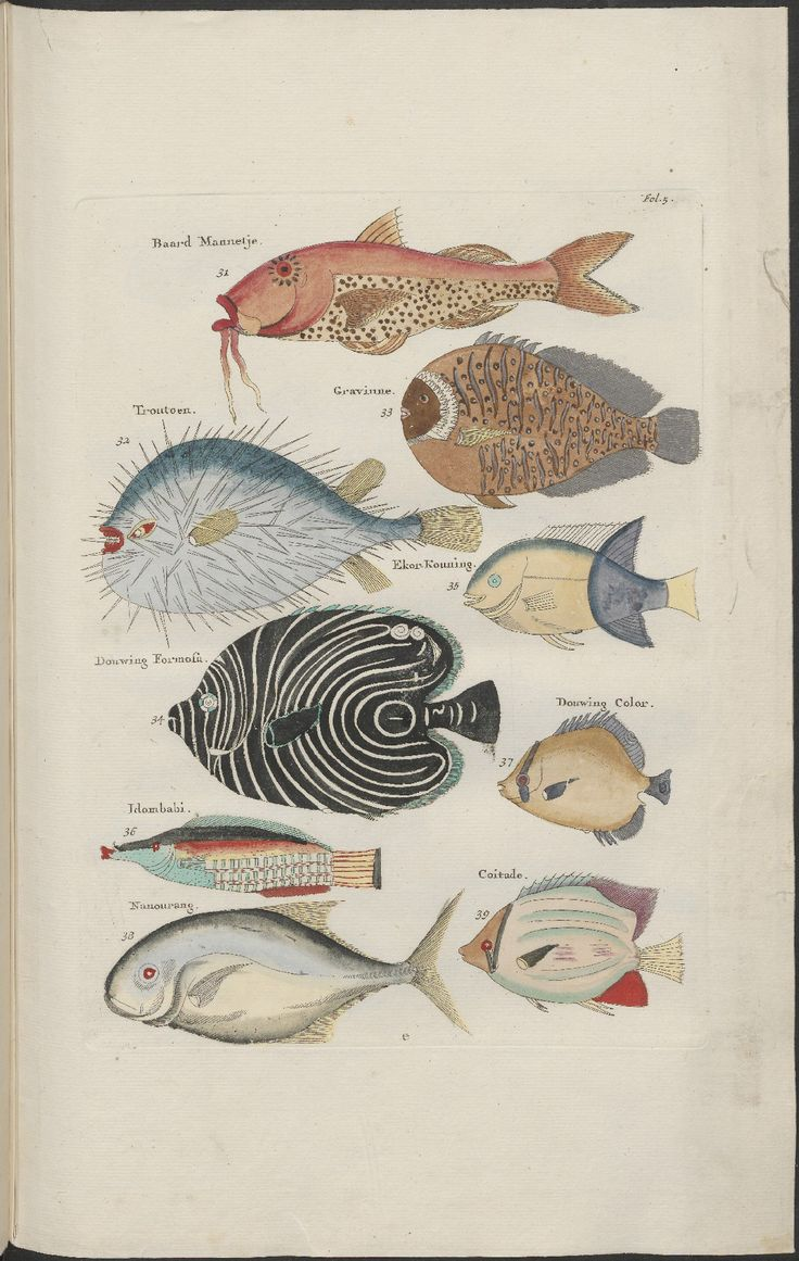 Louis Renard's famous book, 'Poissons, Ecrevisses et Crabes' (or 'Natural History' / 'Natuurlyke Historie'), featuring extraordinary alien fish and sea creature illustrations by Samuel Fallours was first published in 1719.. Biblipeacay