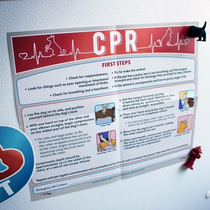Pin by Sabina Kwarciak on DOGS Cpr poster, Pet insurance