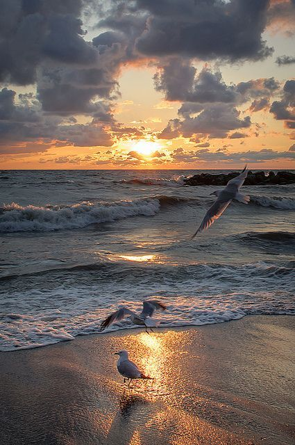 Coucher de soleil avec mouettes ◉ re-pinned by  http://www.waterfront-properties.com/hutchinsonislandrealestate.php