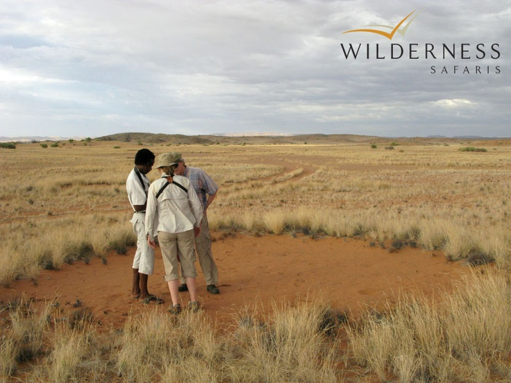 Doro Nawas Camp rests on a sparse, rocky knoll in the breathtaking Aba-Huab River Valley. In times of good rainfall this landscape is transformed into a carpet of golden grass and beautiful desert flowers. #Safari #Africa #Namibia #WildernessSafaris