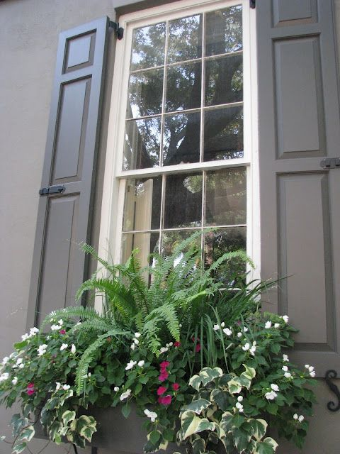 Charleston shutters and window boxes I LIKE the use of the fern in the middle of the windowbox.