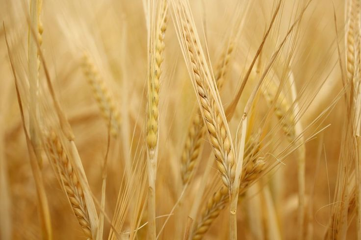 Humans Are Less Genetically Diverse Than Wheat. What Does That Mean for Our Species?