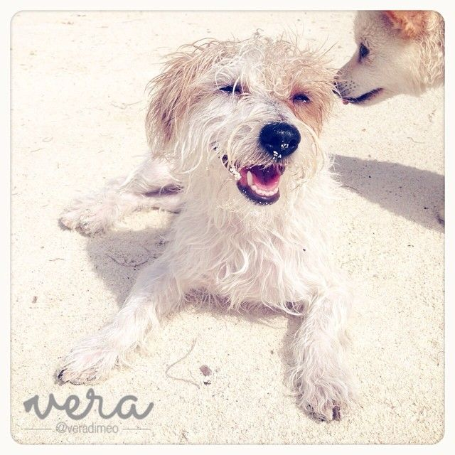 Una sonrisa poschapuzón. http://instagram.com/p/pFfZd8wS1Q/ Dog laughing