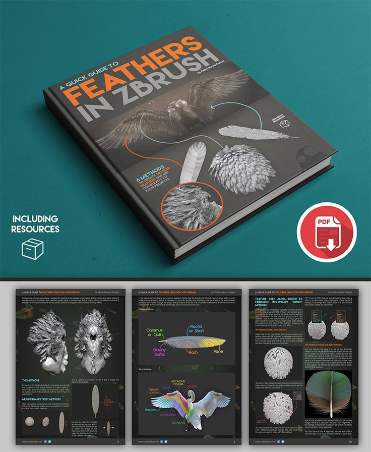 FREE! A Guide to: Creating Feathers in ZBrush