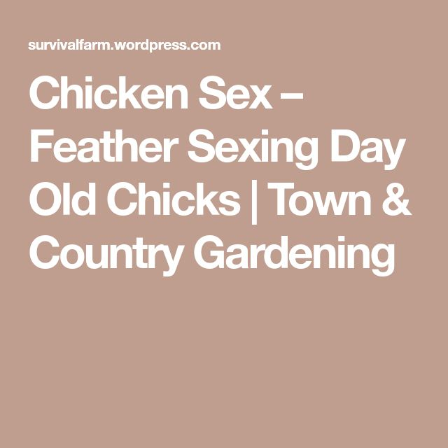 Chicken Sex – Feather Sexing Day Old Chicks | Town & Country Gardening