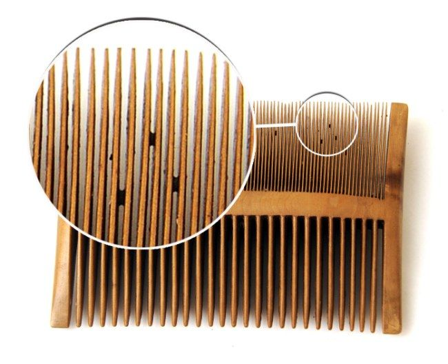 A nit comb taken from the Mary Rose. Preserved nits were found still within it (nit = lice) eeewwww.