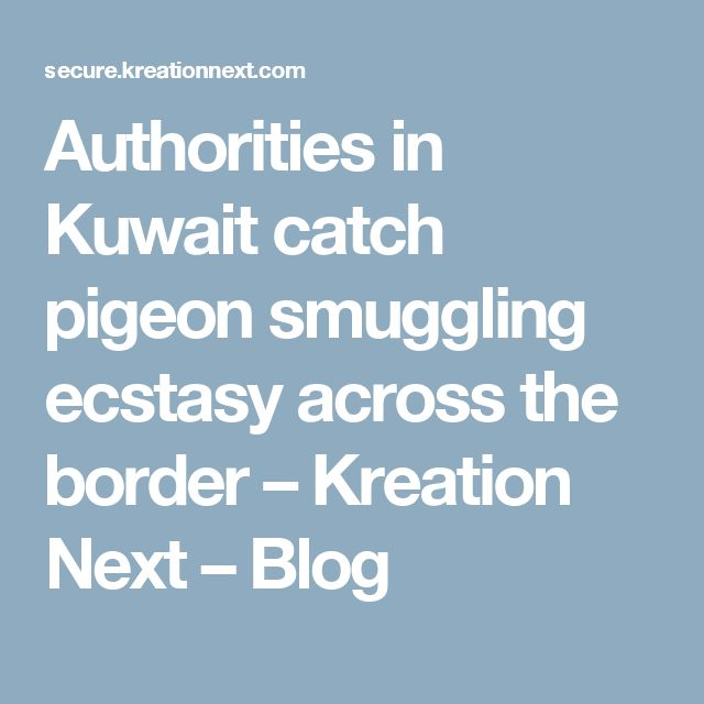 Authorities in Kuwait catch pigeon smuggling ecstasy across the border – Kreation Next – Blog
