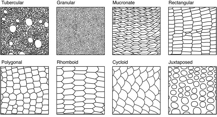 Lizard Scale Shapes Dragon Pinterest Shape Drawing