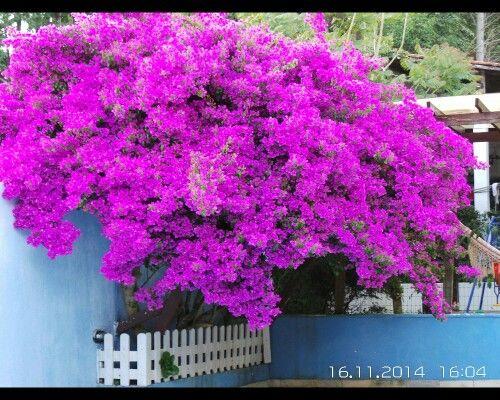 Primavera #flowers
