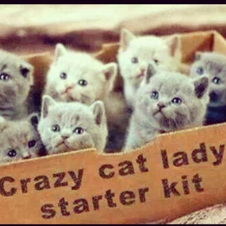 Crazy Cat Lady Starter Kit Picture