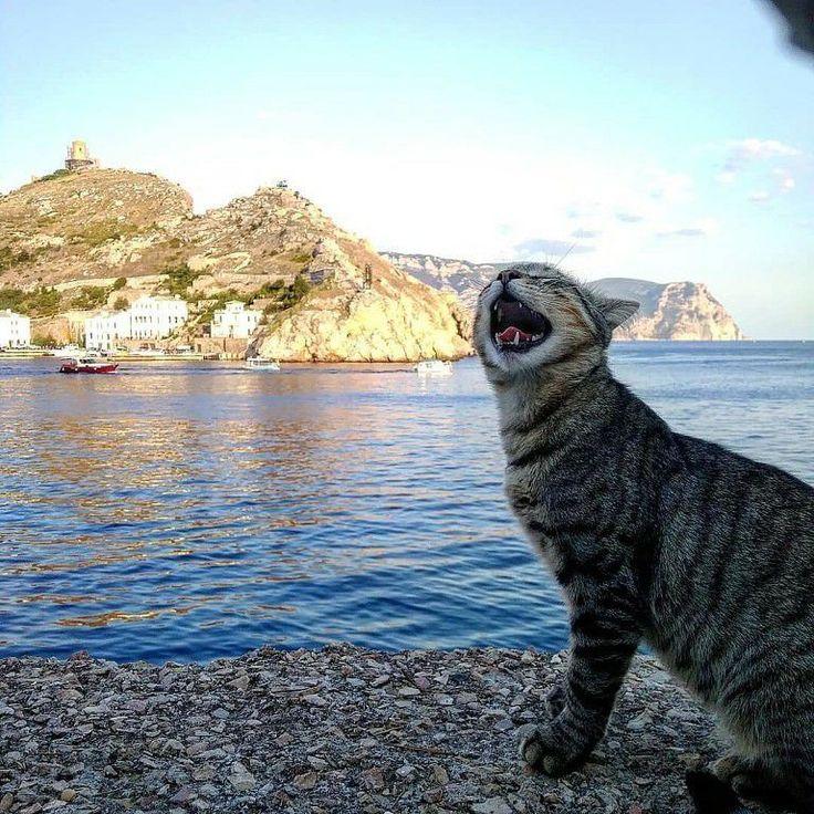 кошки в севастополе картинки раимкулова