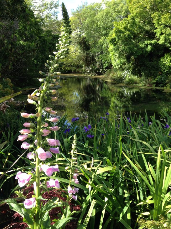Foxgloves by the lake