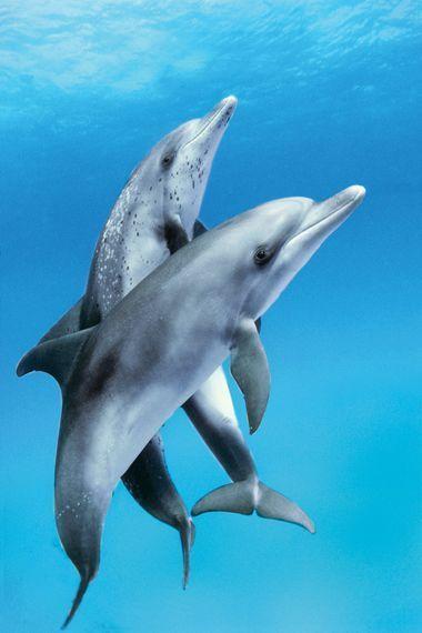 scuba diving with dolphins #ScubaDivingMagazine