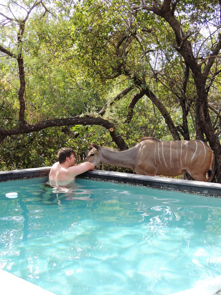 Enjoy moments like this, in the Bush location at : Honey Badger Safari House with in Marloth Park conservancy South Africa. Self Catering Accommodation in South Africa.