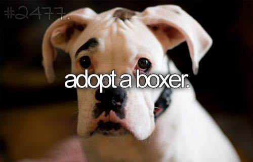 Another one :): Bucketlist, Buckets Lists, Boxers Puppies, Friends, Dreams, White Boxer Puppies, My Heart, Eyebrows, White Boxers Dogs