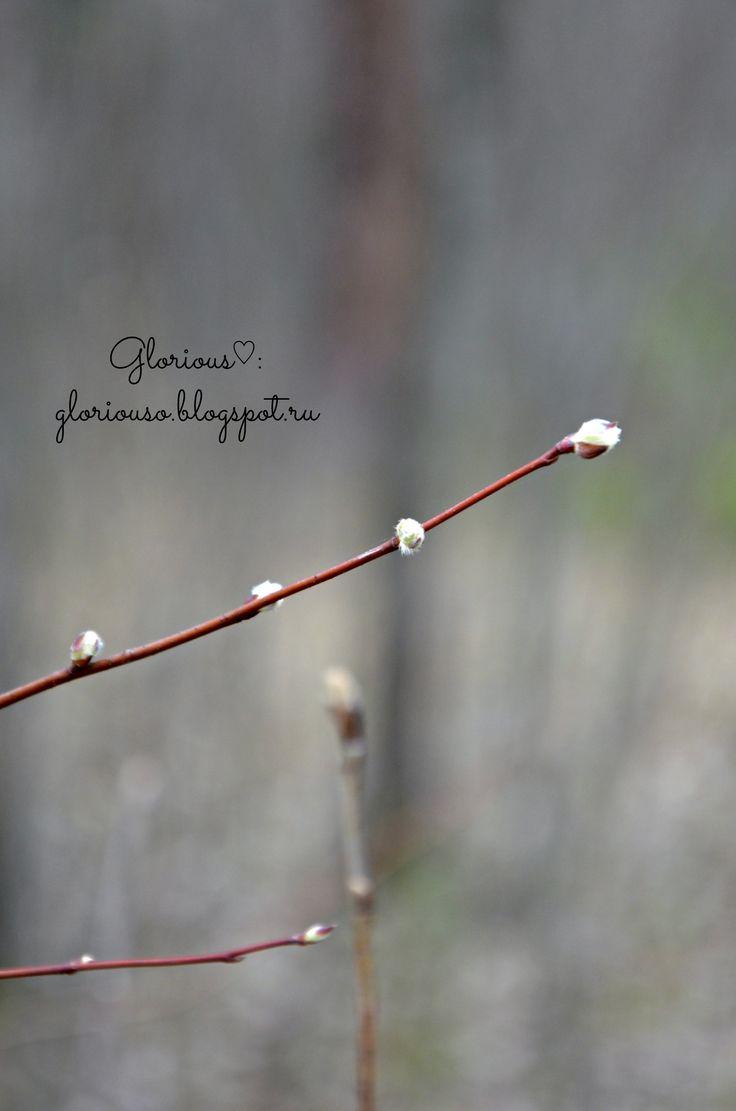 Весенний лес, 2014 год. #spring #forest #nature #macro #Пермь