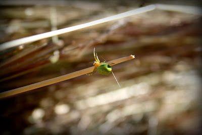 Mój mały, półprywatny świat.: The Itsy Bitsy Spider