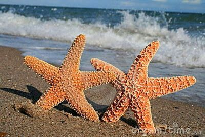 Starfish Facts for Kids -What is a Starfish? - Ency123 - Learn, Create, Have Fun