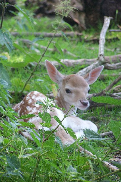 I saw like this laying in the tall grasses on my walk this am. So precious❤