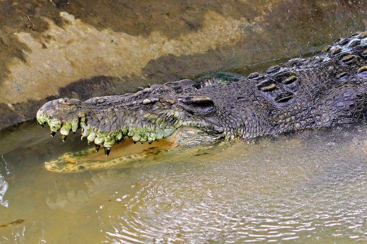 2017-03-05 - crocodile image - Full HD Wallpapers, Photos, #1844109