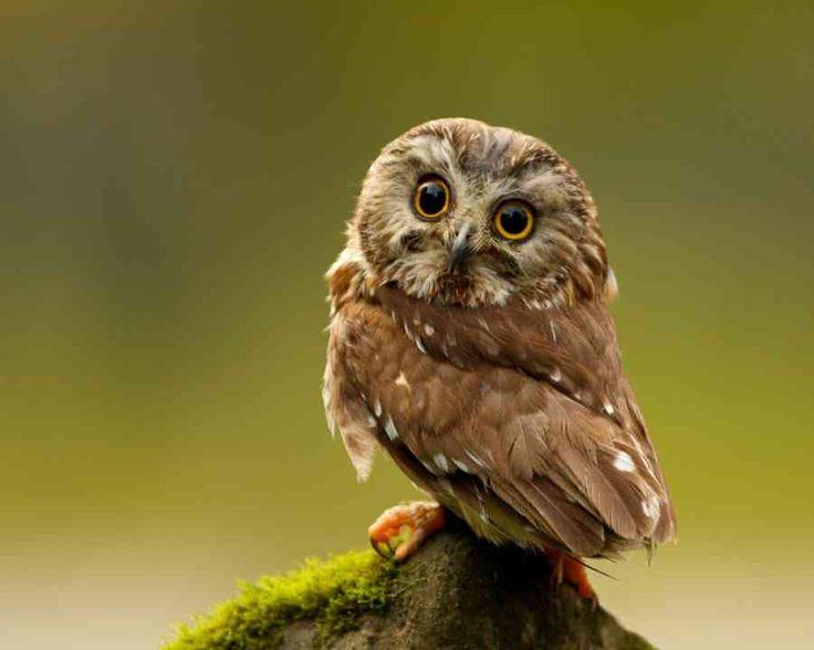フワフワでモコモコ、真ん丸で大きな目! ちょっと怖いというイメージを持たれがちなフクロウですが、よく見てみるとかなりカワイイんです(*´ω`*) そんなフクロウの画像を集めました☆