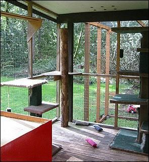 Large outdoor cattery for multiple cats
