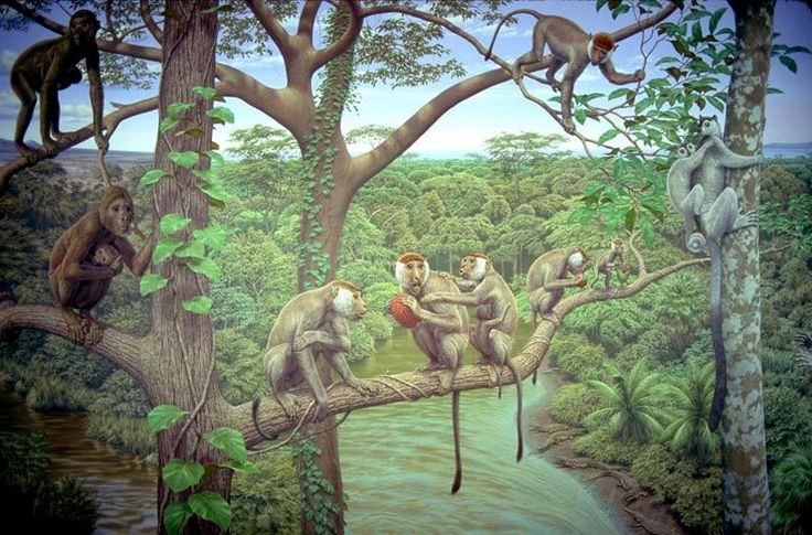 Aegyptopithecus, also called the Dawn Ape, is an early fossil catarrhine that predates the divergence between hominoids (apes) and Old World monkeys. It is known from a single species Aegyptopithecus zeuxis and lived some 35-33 million years ago in the early part of the Oligocene epoch. It likely resembled modern-day New World monkeys (it is about the same size as a modern howler monkey). Aegyptopithecus fossils have been found primarily in modern-day Egypt. Aegyptopithecus is a crucial link…