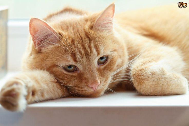 Kediniz bu belirtileri gösteriyorsa, ölümün eşiğinde olabilir.