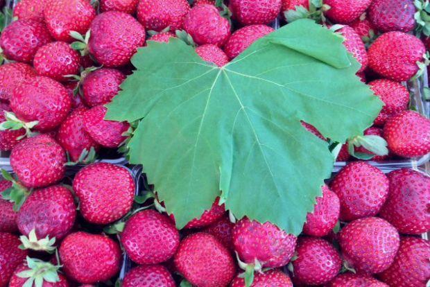 Μαρμελάδα φράουλα και τα κόλπα της