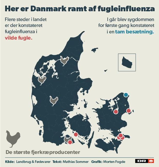 GRAFIK Se, hvor fugleinfluenzaen har slået ned | Nyheder | DR